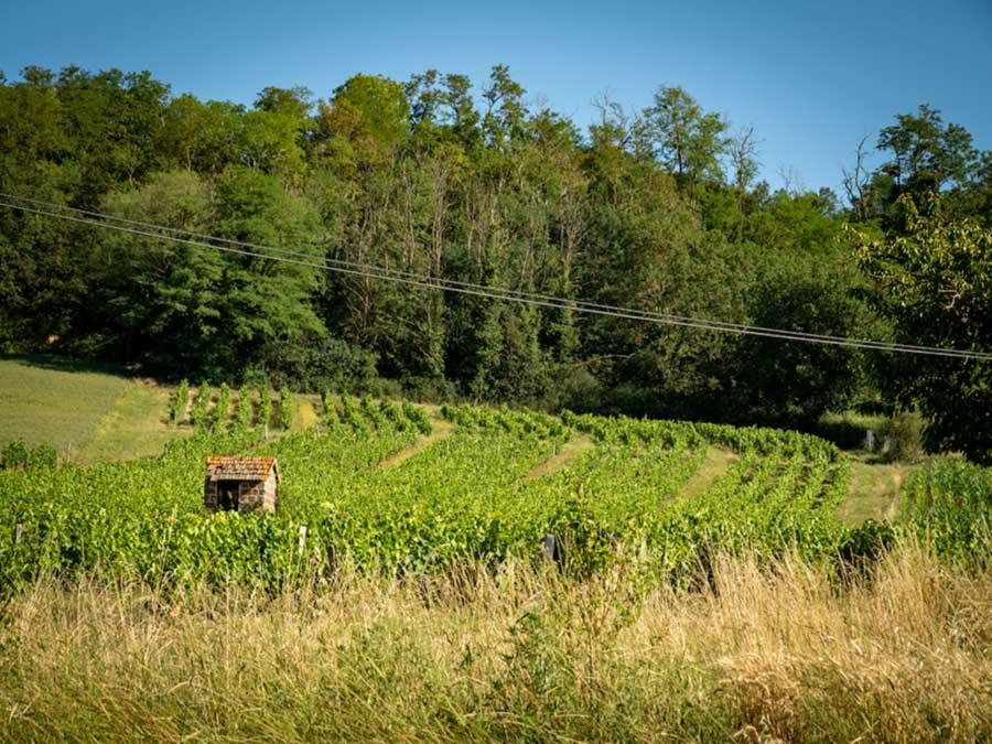 french natural wine vineyard