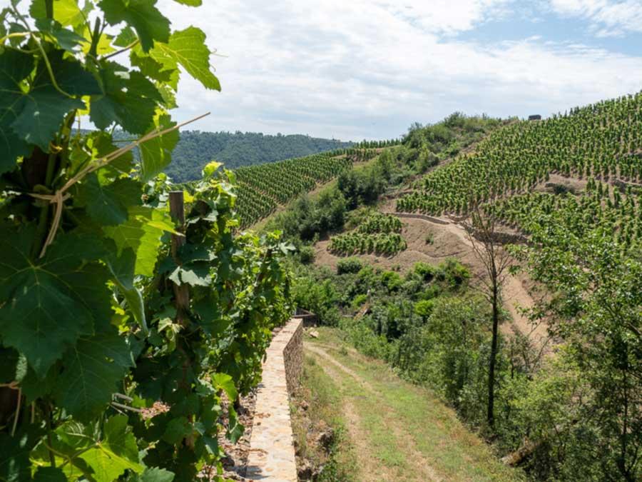 making wine at a vineyard.